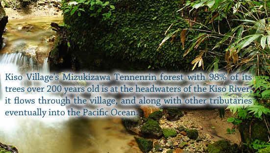 Kiso Village's Mizukizawa Tennenrin forest with 98% of its trees over 200 years old is at the headwaters of the Kiso River, it flows through the village, and along with other tributaries eventually into the Pacific Ocean.